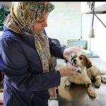 طی سه سال گذشته، چهارهزار سگ ولگرد در شهریار جمعآوری شد