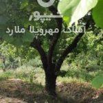 خرید زمین در شهریار