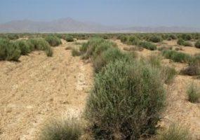 کشف جسد مثله شده زن تهرانی در بیابان های شهریار