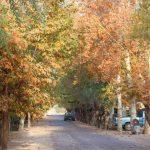 شهردار باغستان : مناسب سازی شهر باغستان برای معلولان