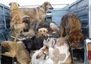سگ کشی در شاهد شهر ؛افول انسانیت